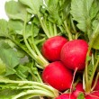 Fresh radish background — Stock Photo