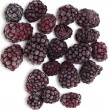 Frozen blackberries — Stock Photo