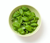 Basil leafs — Stock Photo