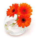 Three gerbara flowers in a glass vase — Stock Photo