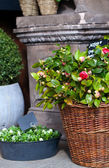 Colorful flowers in flower market — Stock Photo