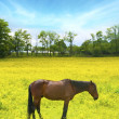 Horse standing in field - Stock Photo