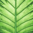 Close up of bright green leaf — Stock Photo