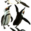 Penquins — Stock Photo