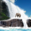 Stock Photo: Elephant at waterfall