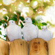 Stock Photo: White doves