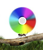 Ant carrying CD — Stock Photo