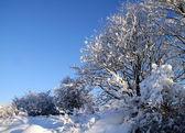 冬の雪と木 — ストック写真