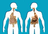 Human Internal Organs — Stock Photo