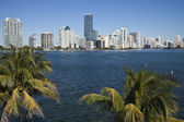 Palms and skyline of Miami — Stock Photo