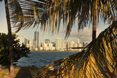 Miami between palm trees — Fotografia Stock