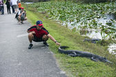 Tourist touching aligator — Stock Photo