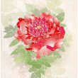 Greeting card with peony. Illustration peony. - Stock Vector