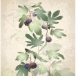 Detailed image of bunch of figs on tree. Figs in fig tree. — Stok Vektör #9234510