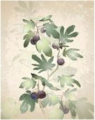 Detailed image of a bunch of figs on a tree. Figs in a fig tree. — Stok Vektör
