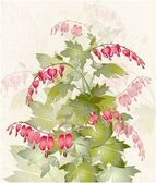 "Illustration ""bleeding heart"" (Dicentra spectabilis). Greeting card with flower. — Stok Vektör"