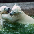 Stock Photo: White Bears in Moscow Zoo