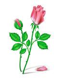 Czerwone róże — Wektor stockowy