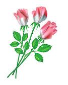 Rosas — Vector de stock