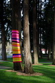 Sunset highlight on a tree sock in Redmond's park — Stock Photo