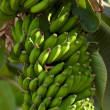 Stock Photo: Bananas in nature