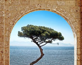 Stone arch and tree — Fotografia Stock