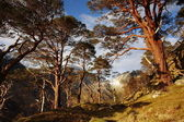 Glen Nevis in April. — Stock Photo