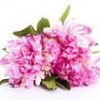 Bouquet of peony — Stock Photo