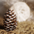 Stock Photo: Conifer cone
