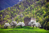 Flowering trees — Stock Photo