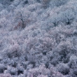 Stock Photo: First frosts