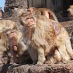 Monkey group are looking something — Stock Photo #9666555