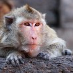Monkey is looking something — Stock Photo #9666566