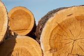 Logs of tree — Stock Photo