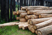 Logs of tree raw — Stock Photo