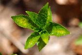 Cultivos de primavera — Foto de Stock