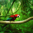 Parrot in the forest — Stock Photo #8230230