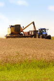 Grain harvest — Stock Photo