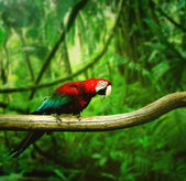 Parrot in the forest — Stock Photo