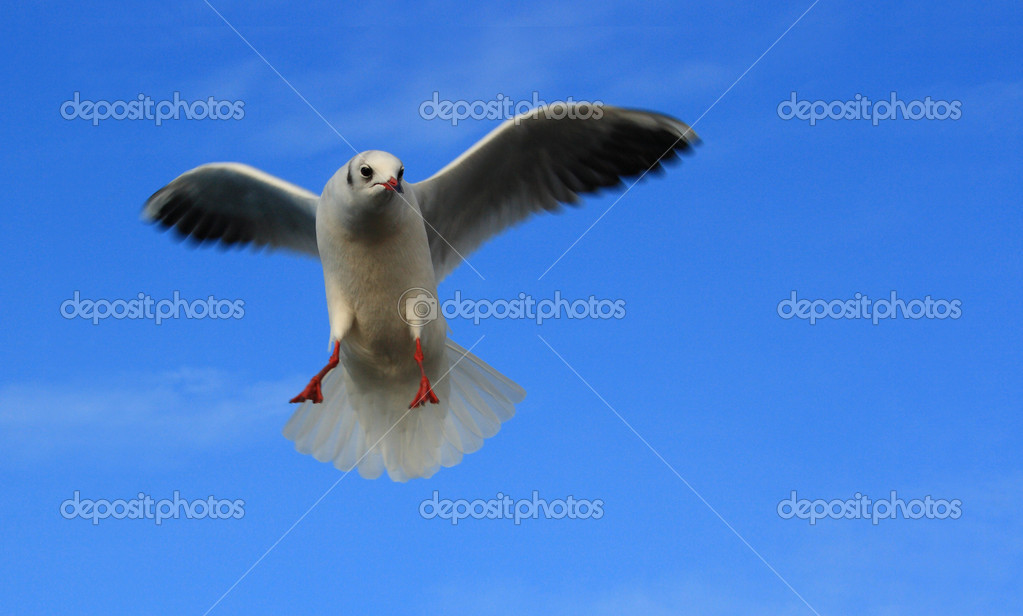 Seagull against blue sky, viewed from below — Stock Photo #8230493