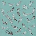 Hand drawn Birds - for design and scrapbook - in vector — Stock Vector