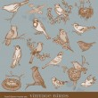 Hand drawn vector set: birds - variety of vintage bird illustrat — Stock Vector