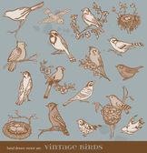 ручной набор обои вектор: птицы - различные старинные птица illustrat — Cтоковый вектор