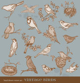 Hand drawn vector set: birds - variety of vintage bird illustrat — Vecteur