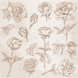 Royalty-Free Stock Vector: Flower Set: Detailed Hand Drawn Roses in vector
