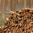 Pile of Wood - 2 — Stock Photo