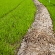Path to the field. — Stock Photo