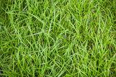 Green grass. — Stock Photo