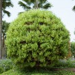 Stock Photo: Shrubs in garden.