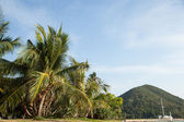 Coconut trees and mountains. — Stock Photo